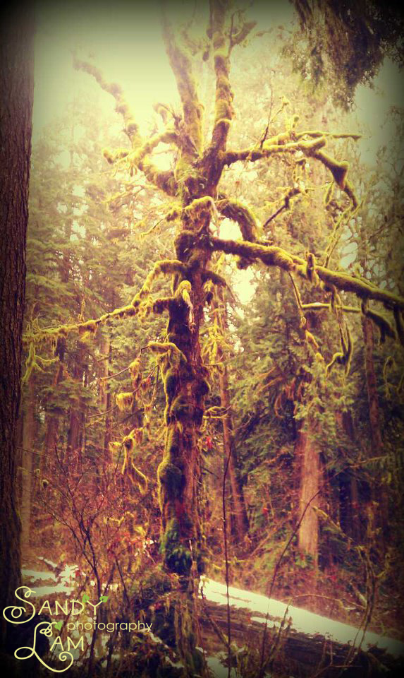 Old Growth Tree